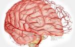 Упражнения для улучшения кровообращения головного мозга и шеи