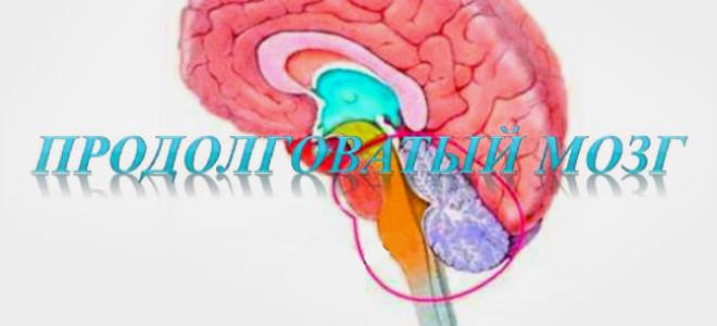 Продолговатый мозг, его функции и строение