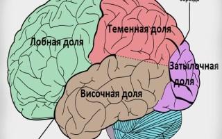 Функции больших полушарий головного мозга