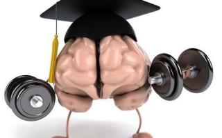 Сколько весит мозг обычного человека