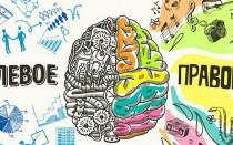 За что отвечает правое и левое полушарие мозга