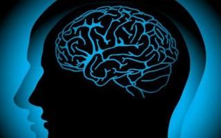 Функции и строение мозжечка головного мозга