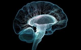 Ствол головного мозга: строение, функции, общие сведения