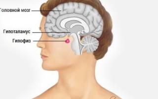 Что такое гипофиз головного мозга: функции, симптомы нарушения работы