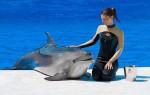 Мозг дельфина и мозг человека: сходство и различие