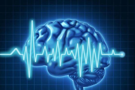 о головном мозге