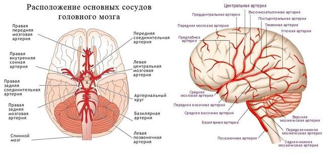 устройство кровоснабжения