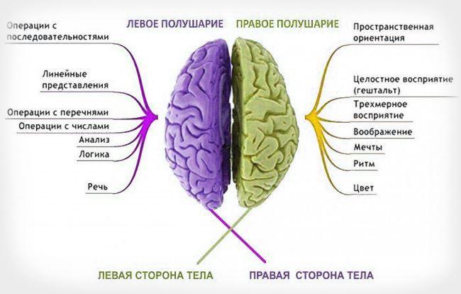 Функции каждого из полушарий
