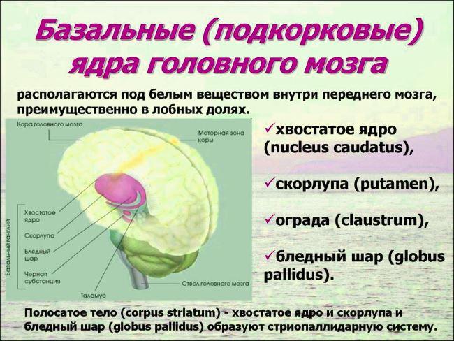 Строение ядер