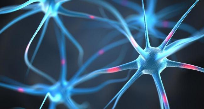 Восстановление клеток мозга